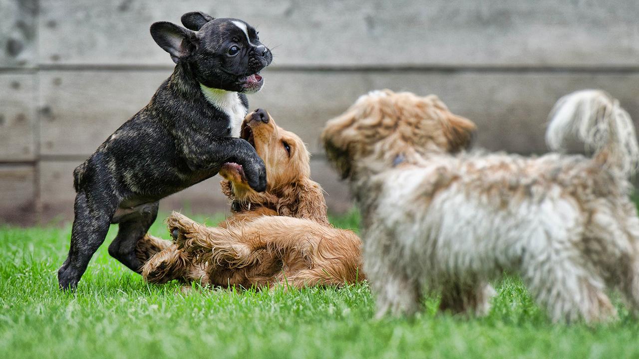 greendogclub campo gioco