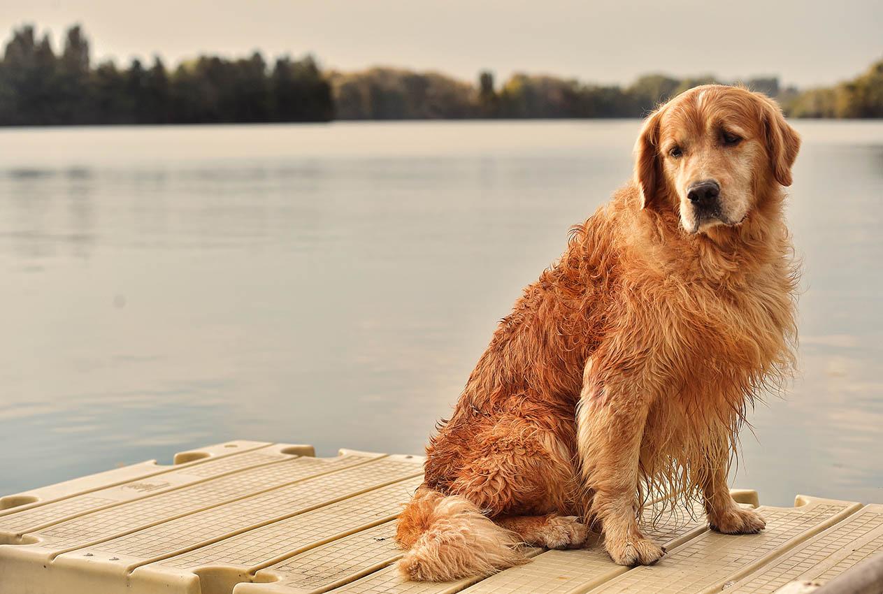 Un'oasi esclusiva </br>per il benessere</br> dei cani