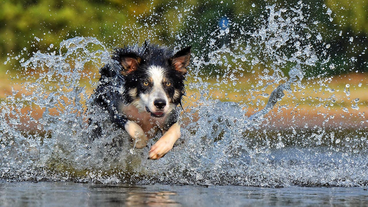 greendogclub – il lago 4