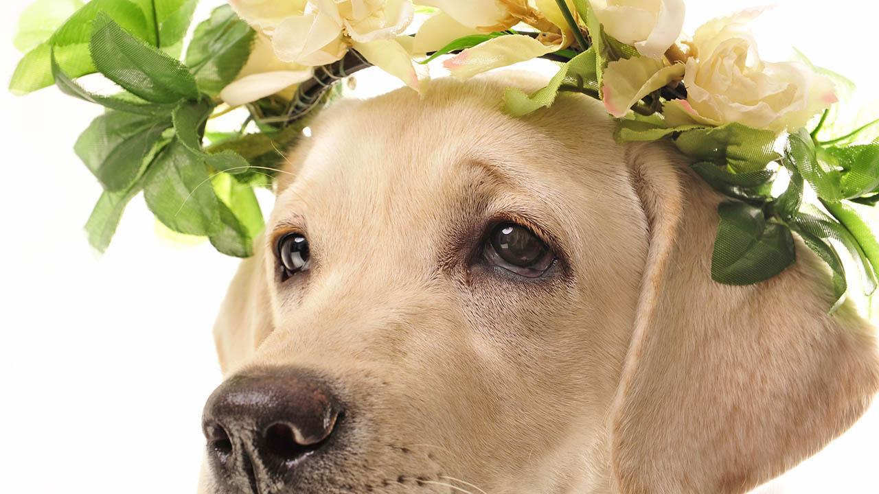 greendogclub -wedding dog service 2