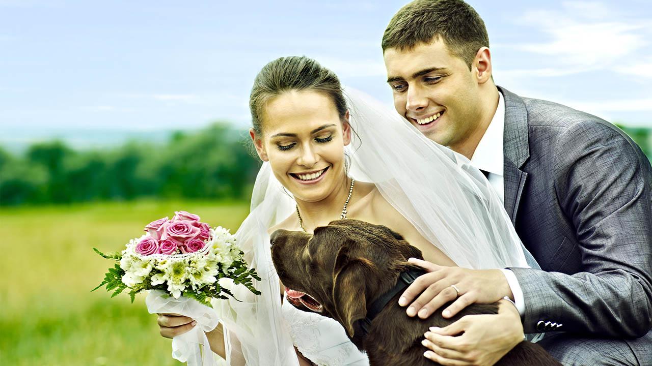 greendogclub – wedding1